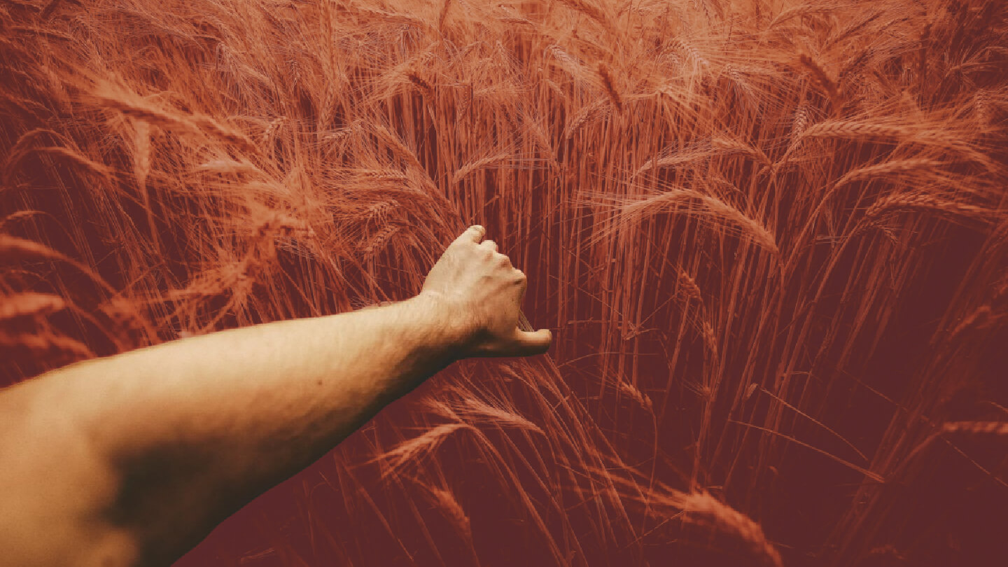 A picture of a man bending wheat, signifying God causing evil systems to collapse in preparation of a great Harvest.