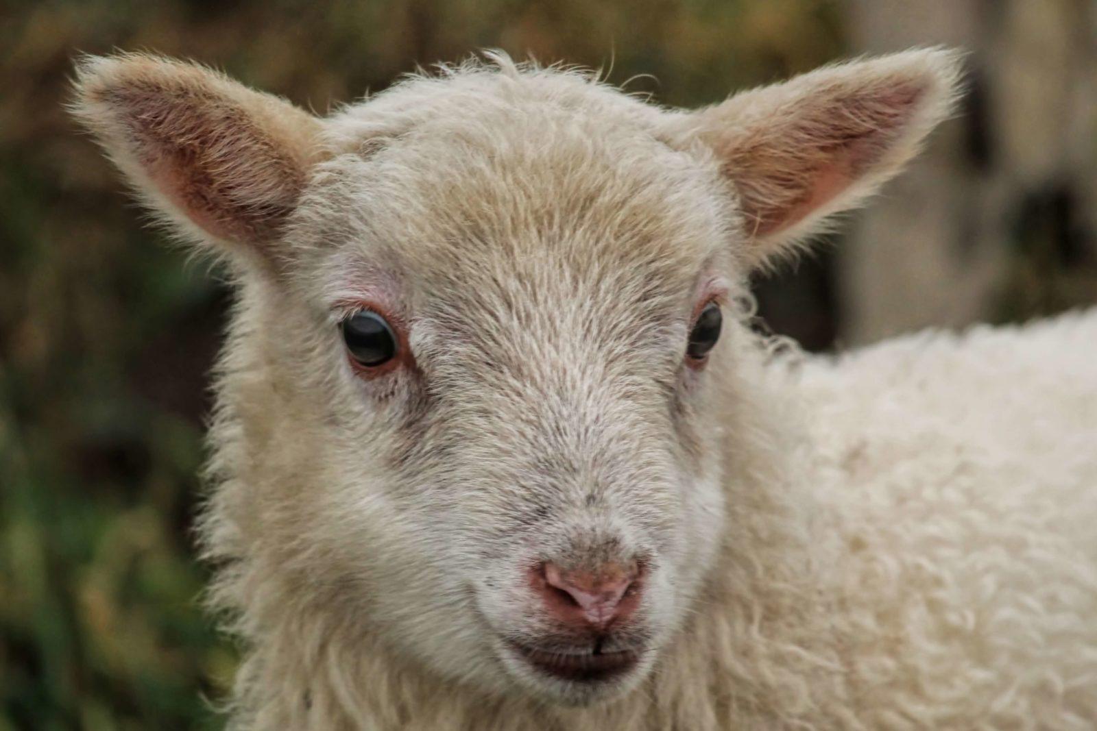 Succat Hallel | Prayer Alerts | Coronavirus and Blood of the Passover Lamb